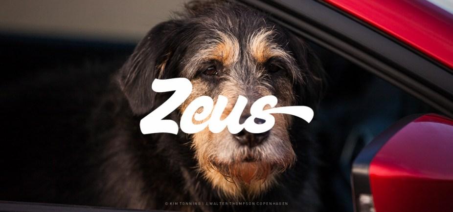 Zeus_Galleri