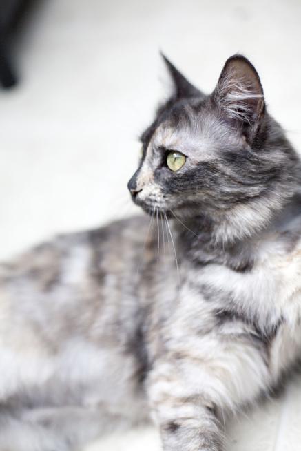 Do Good Thursday: Christie the Cat