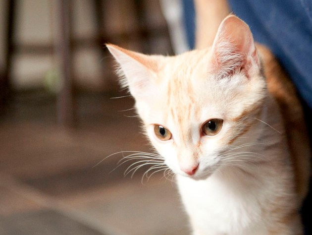 Do-Good Thursdays: Avery the Cat
