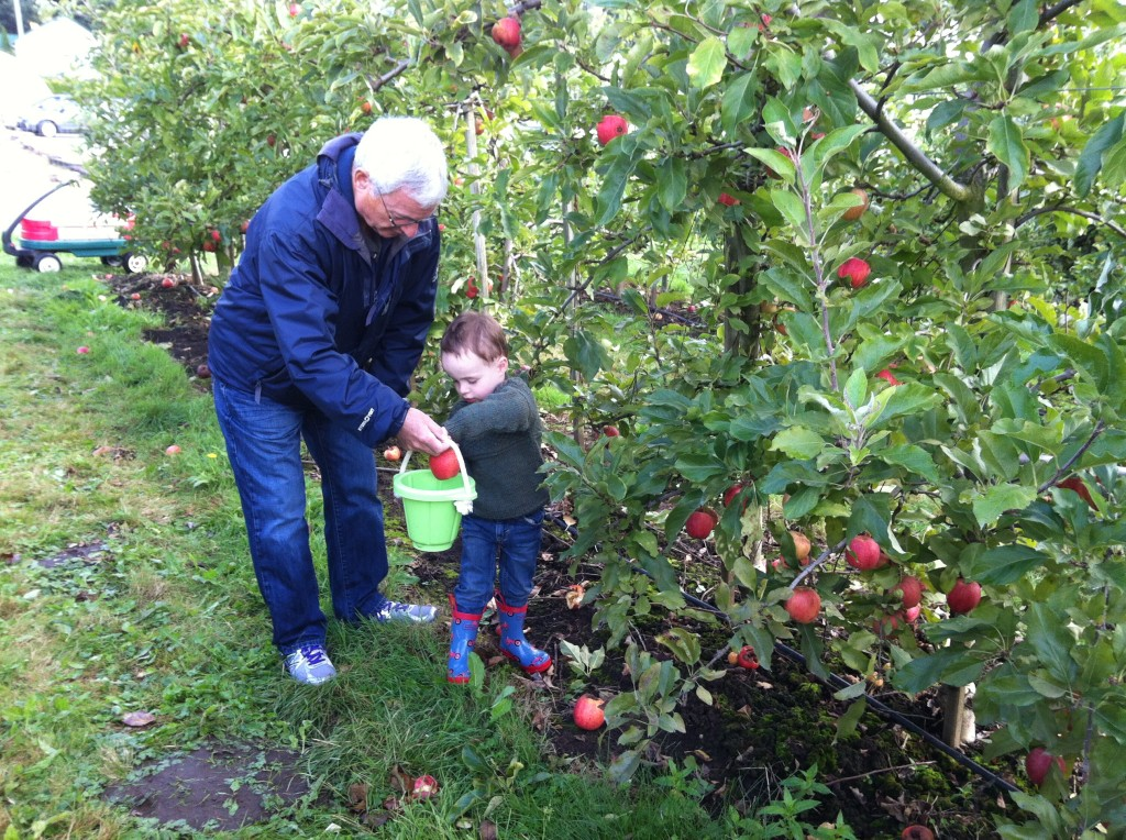 Apple picking with Grampop.