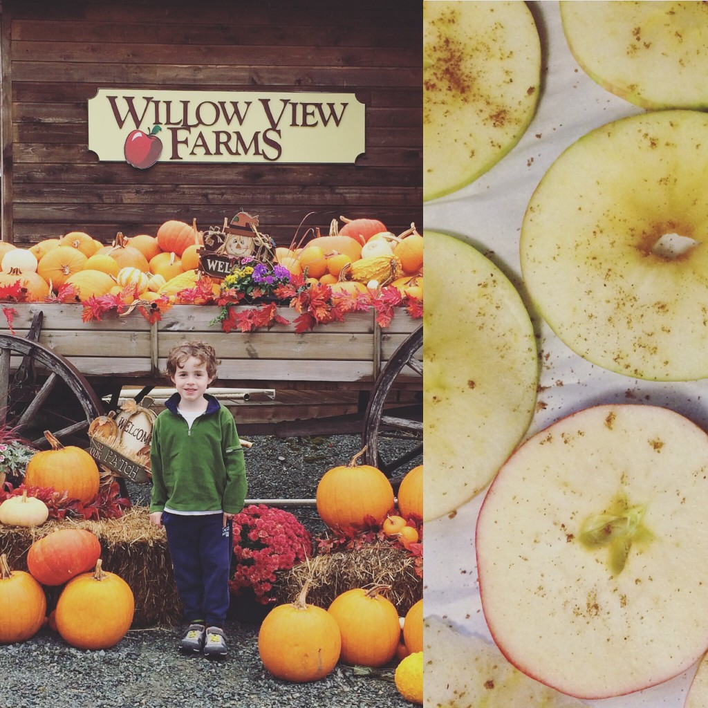 We made apple chips after apple-picking at Willow View Farms