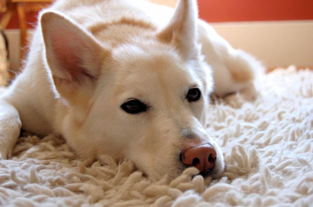 Cleo the Dog, 2002-2017