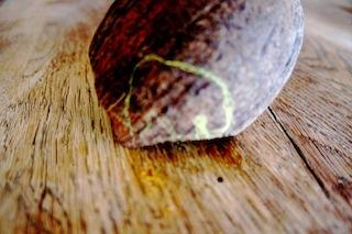 Zeichnet das Mammut auf die Kokosnuss. foto (c) Kinderoutdoor.de