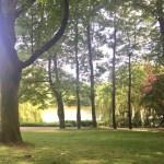 Ausblick auf den Teich