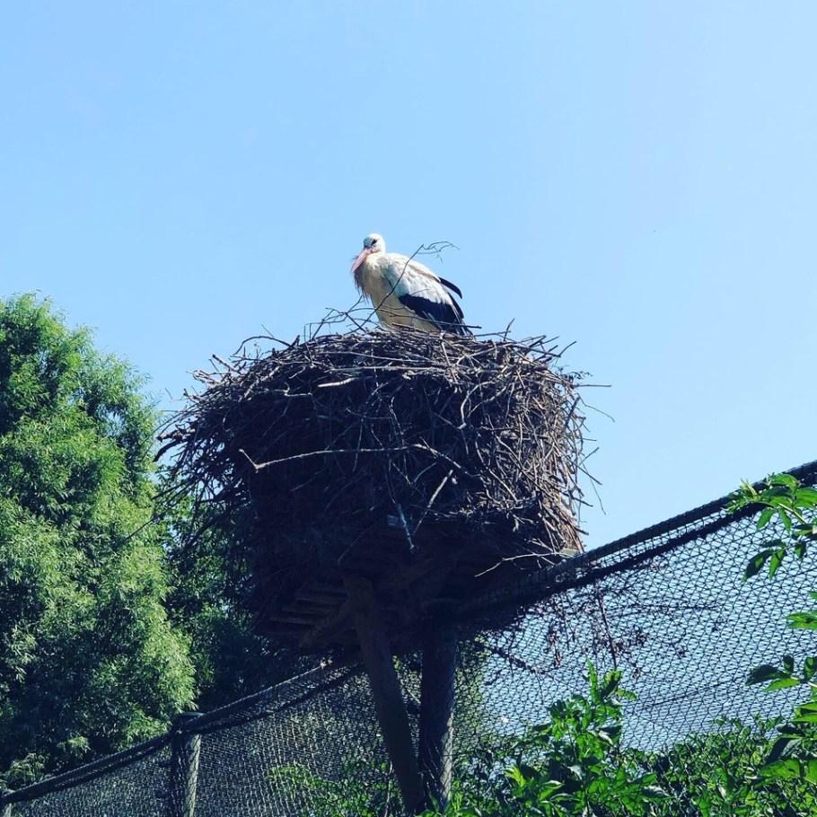 Storch im Nest - Westküstenpark, Sankt Peter-Ording