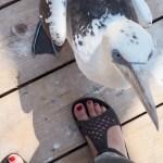 freche Vögel - Westküstenpark, Sankt Peter-Ording