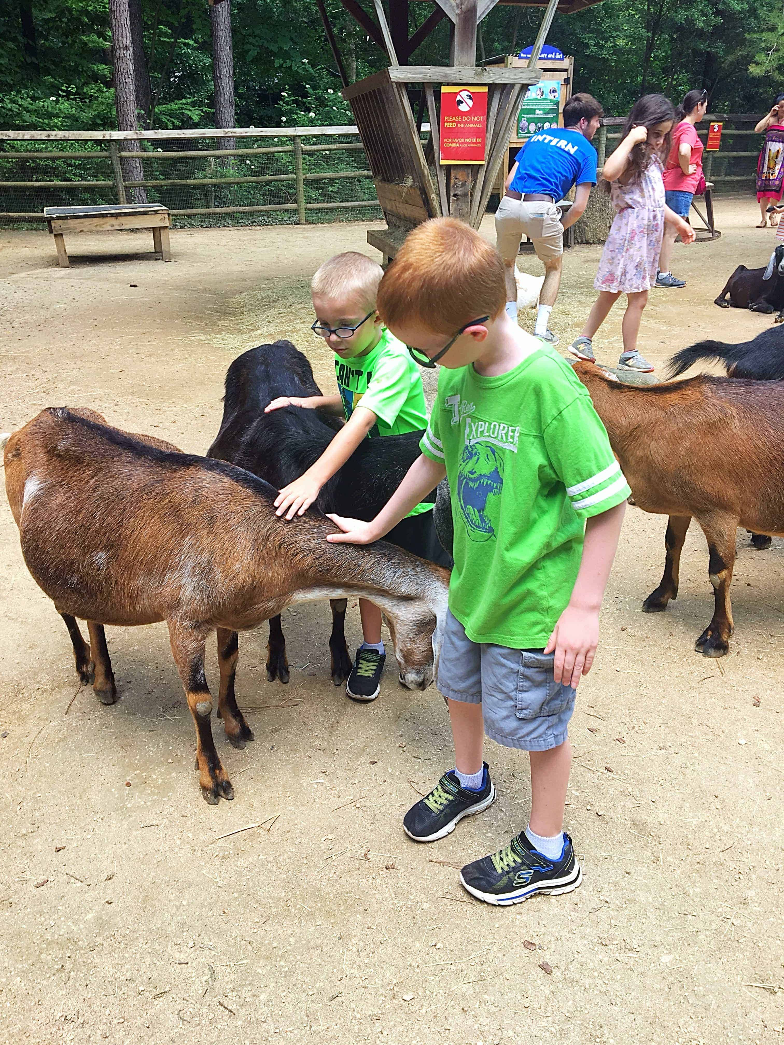 Heading to Zoo Atlanta? Then check out my Smart Tips for Visiting Zoo Atlanta with helpful tips like the best time to visit, ways to save money on tickets, parking tips, and more!  #zooatlanta #atlantageorgia #familyvacation