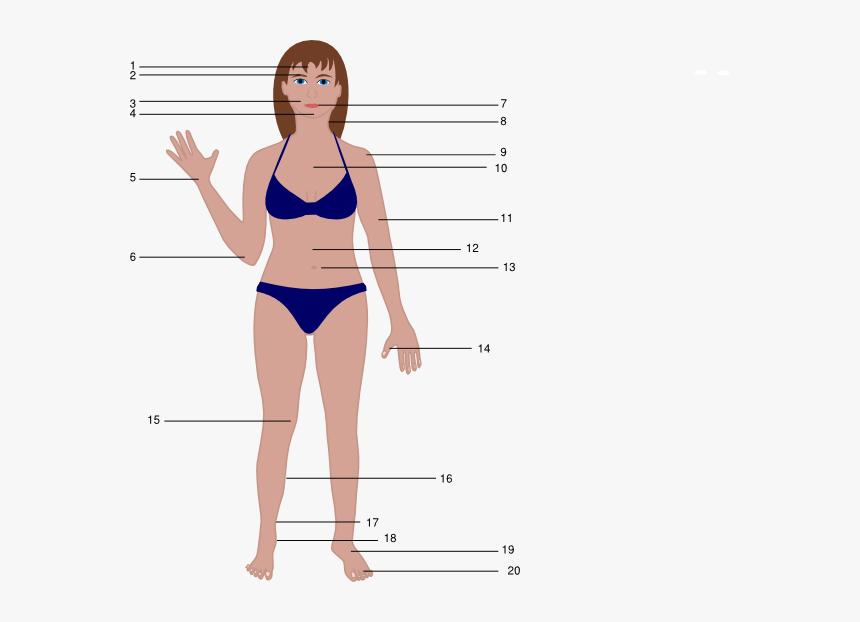 Human Body Cartoon Female Women Body Vector Png Transparent Png Kindpng
