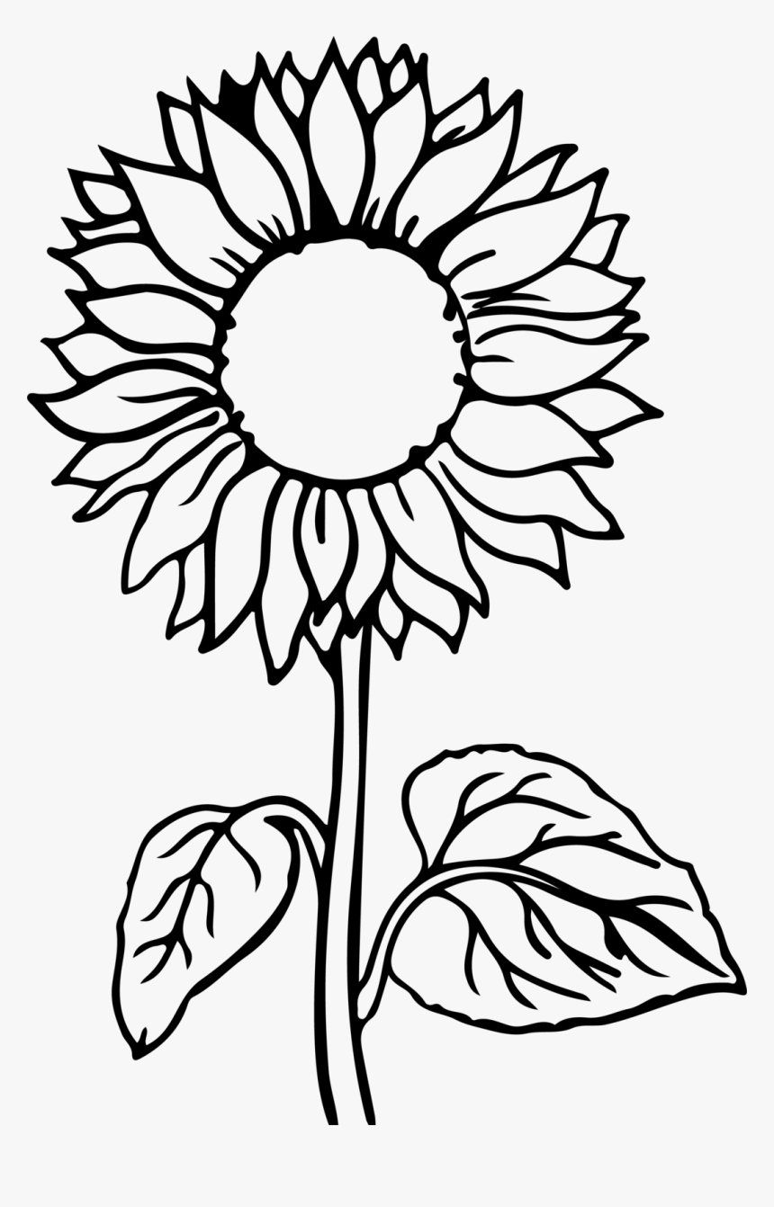 Sunflower Flower Coloring Pages Hd Png Download Kindpng