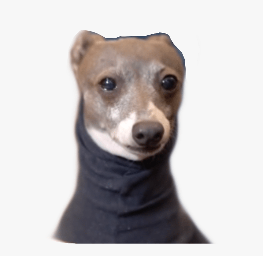 Kermit The Dog Know Your Meme