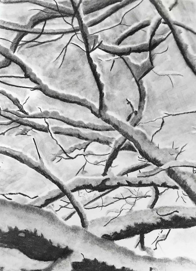 branches-winter-charcoal-drawing-carol-artis