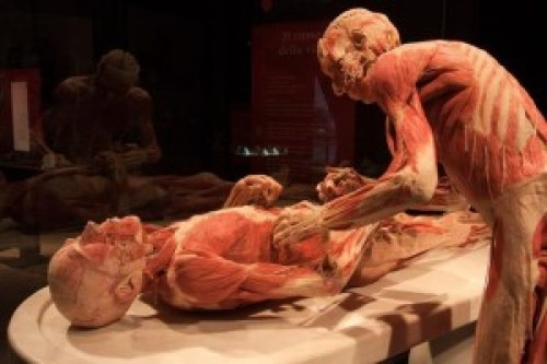 body_worlds_napoli_-_ph_mauro_pagnano__(9)_672-458_resize