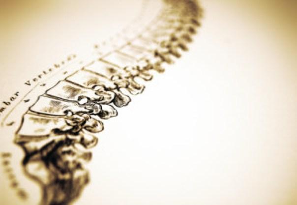 la colonna vertebrale, asse portante della nostra vita