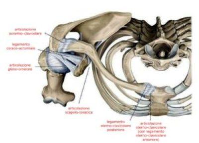 articolazioni della spalla