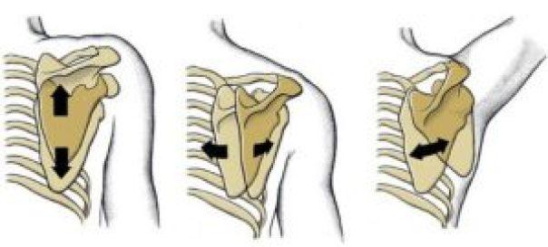 movimenti articolazione scapolo-toracica