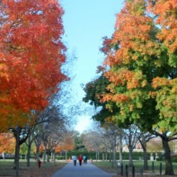 Fall, University Illinois