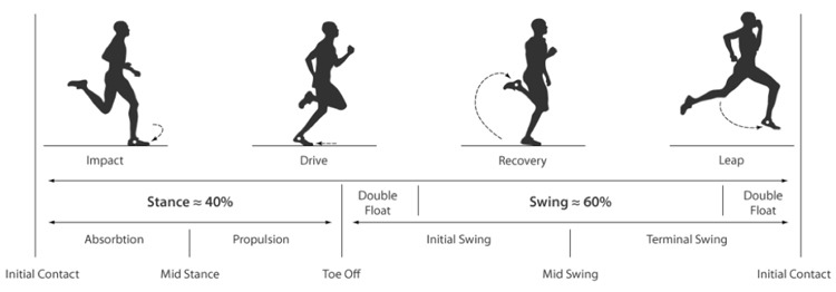 Phases of Running Gait