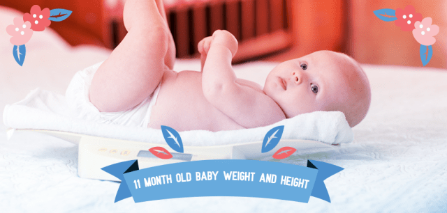 11_Month_Old_Baby_Weight_And_Height