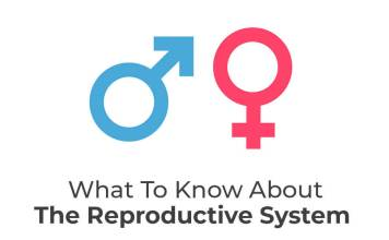 What To Know About the Reproductive System