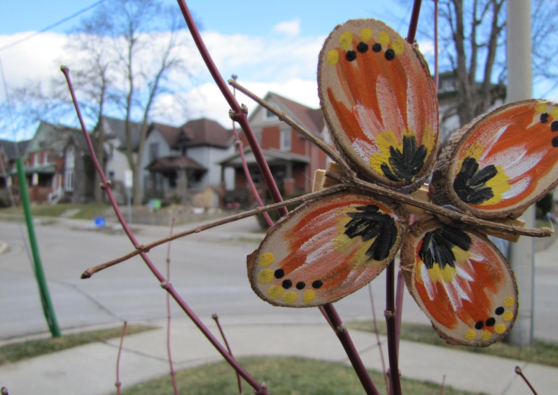 The Bashful Butterfly