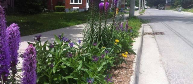 Downtown Garden Swap & Sale