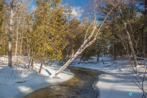 Shalda Creek