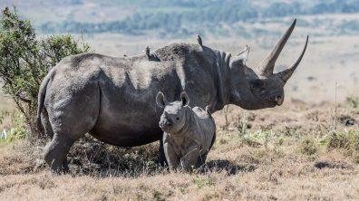 Safari 4gg Amboseli 4 Days Amboseli Tsavo West Tsavo East 4 Tage Amboseli Tsavo West Tsavo Ost Safari 5gg Amboseli Taita Hills Tsavo Est