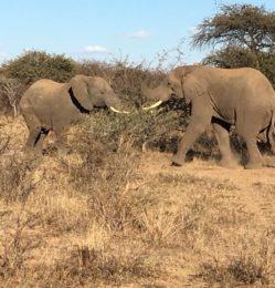 Reserve – elephants – July