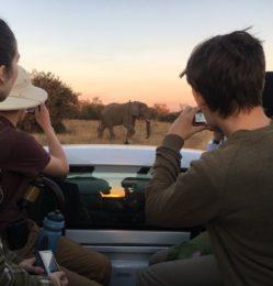 Safari – elephant – July