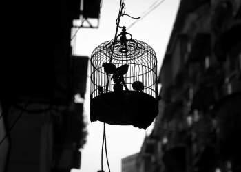 Caged Bird. StockPhoto