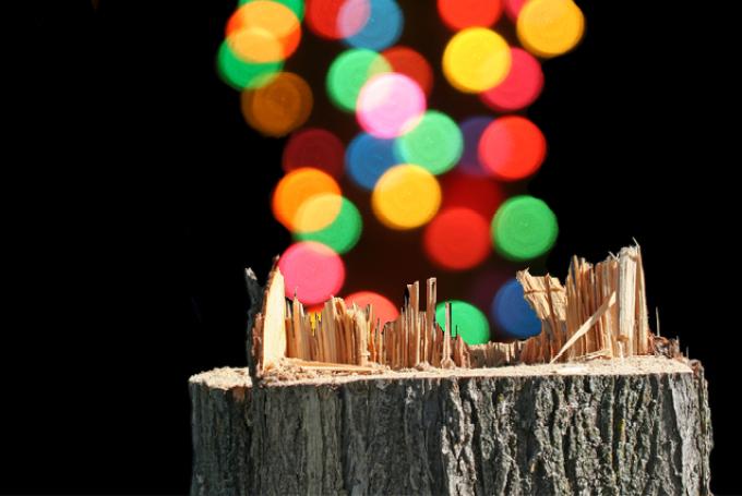 Tree-Gate, Christmas Tree, tree lighting ceremony, tree cutting bylaw, Kingston, Ontario
