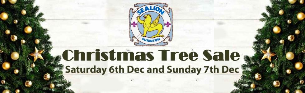 Christmas trees Surbiton