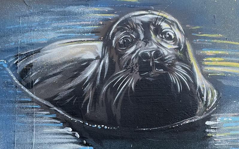 Freddie The Seal Tribute