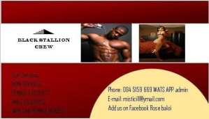 black stallion 3