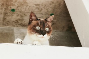 屋根の上の猫