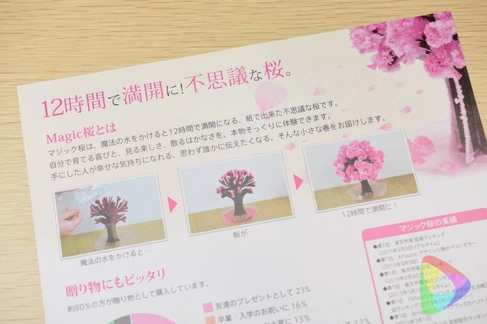 マジック桜のチラシ