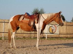 Chey, Paint-Horse