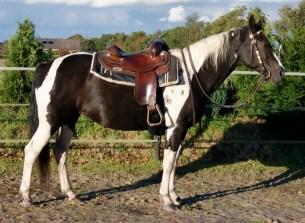 Katany, Paint-Horse