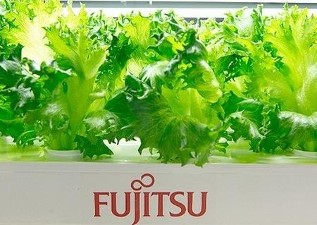 fujitsu6