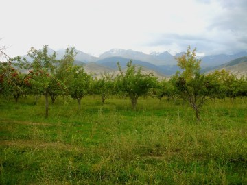 1280px-apple_orchard