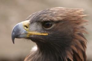 Birding and wildlife in Kyrgyzstan