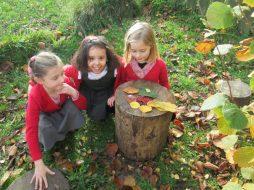 autumn leaves 012