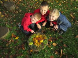 autumn leaves 013