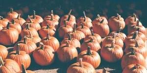 Pumpkins for Hallowe'en