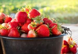 Free Strawberry Festival – Mudd's Grove – June 12 – 5:30-7:00 pm