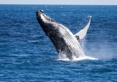 5 Spots to Whale Watch!