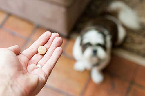 How to Give Your Pet Medication