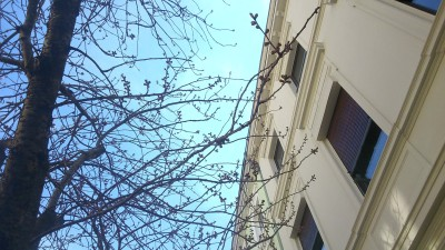 Kirschblütenliveticker 07.04.15