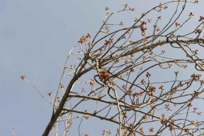 FR.10.04.15-Kirschblüte Bonn #kibo15