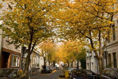 Herbst_DSC8556